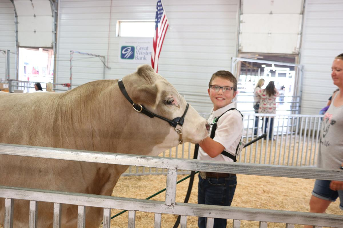PHOTOS: Scotts Bluff County Fair Sale 2019