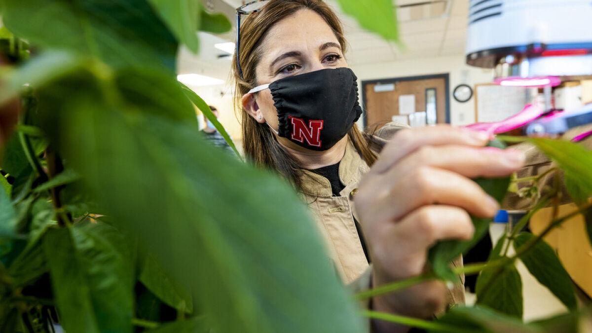 Q&A with UNL plant ecophysiologist