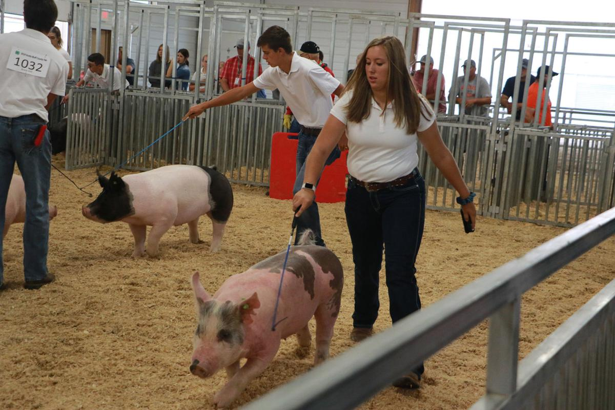 PHOTOS: Scotts Bluff County Fair Swine Showmanship 2019