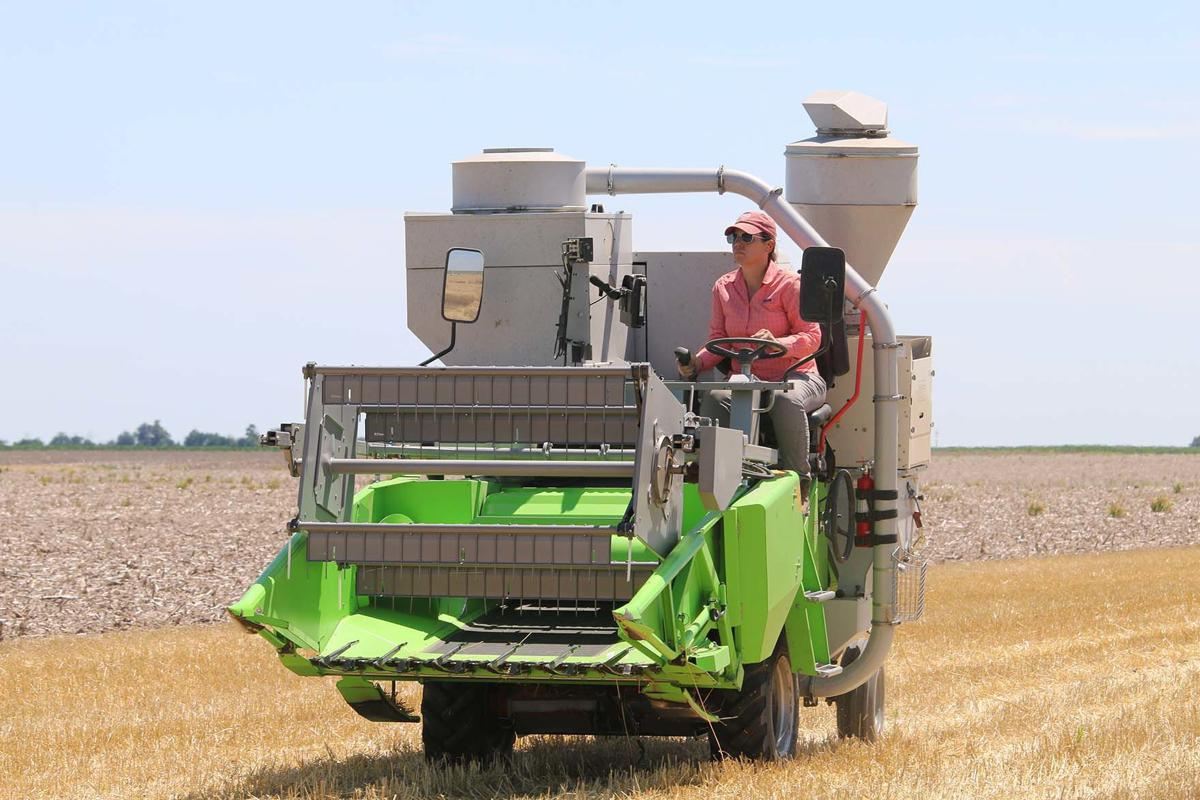 Box Butte County Wheat Testing Shows High Yield