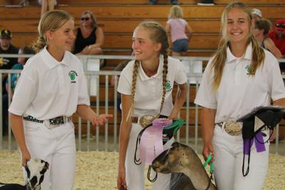 4-H'ers compete for dairy goat showmanship titles