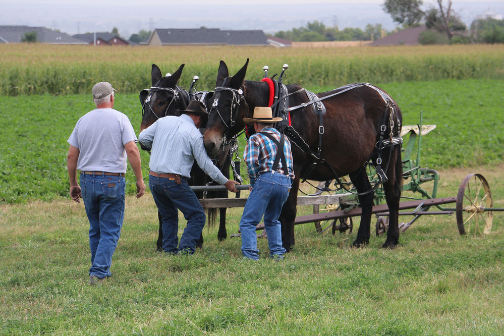 Harvest Festival to feature sugar beets and equipment