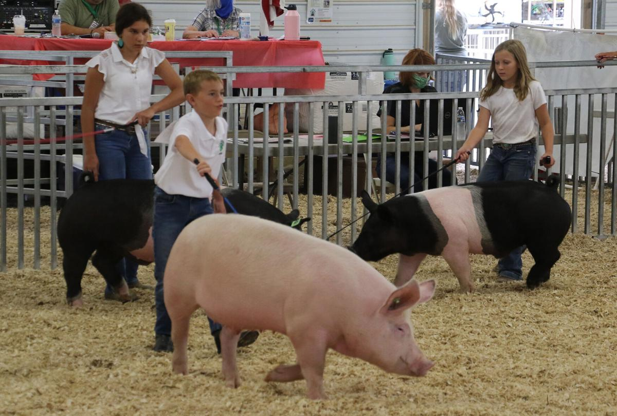 PHOTOS: Scotts Bluff County Fair Swine Showmanship 2020