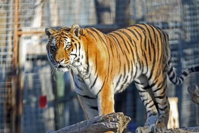 When the temperature drops, how does the Riverside zoo animals fare? (copy)