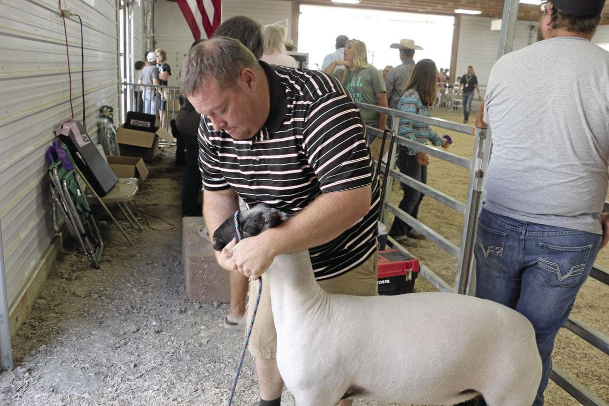 PHOTOS: Sheep Showmanship at the Scotts Bluff County Fair 2019