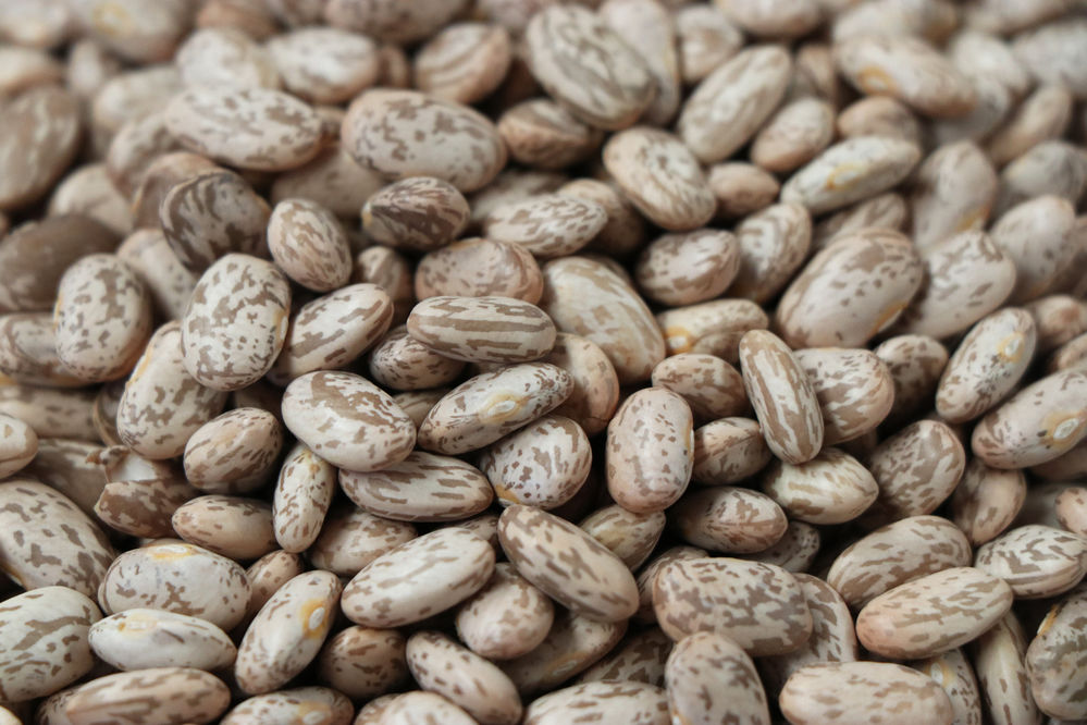 Panhandle Perspectives: Study sheds light on how pinto beans help reduce cholesterol