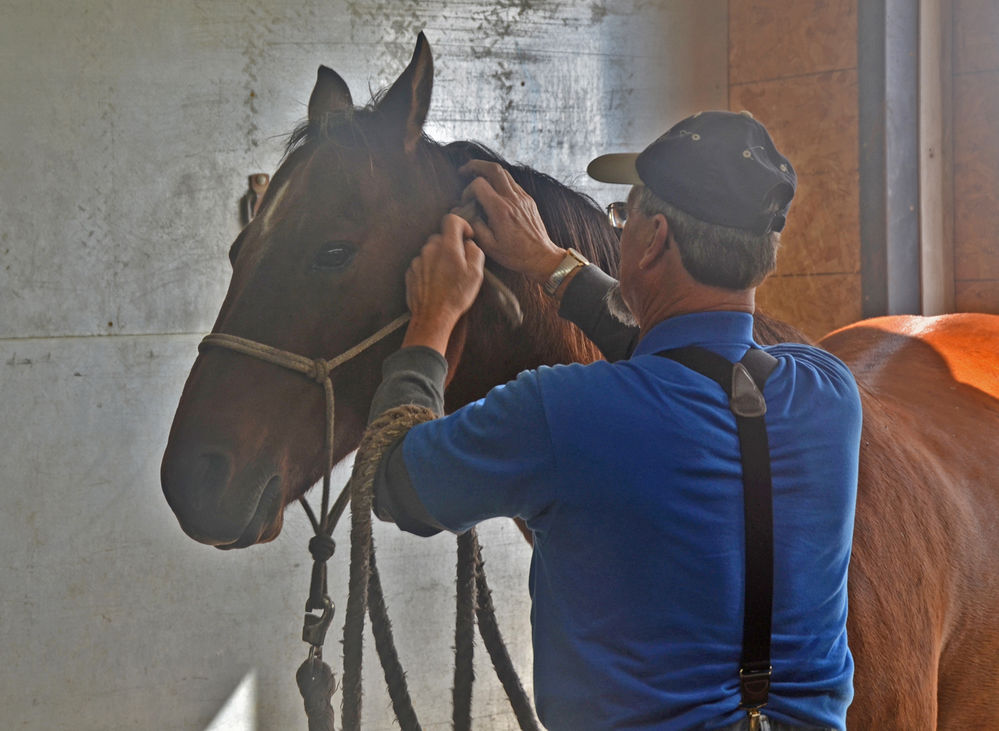 Decades of experience help Mike Sussex make horses' hooves fit as a fiddle