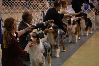 Annual AKC dog show scheduled for late March | Local News