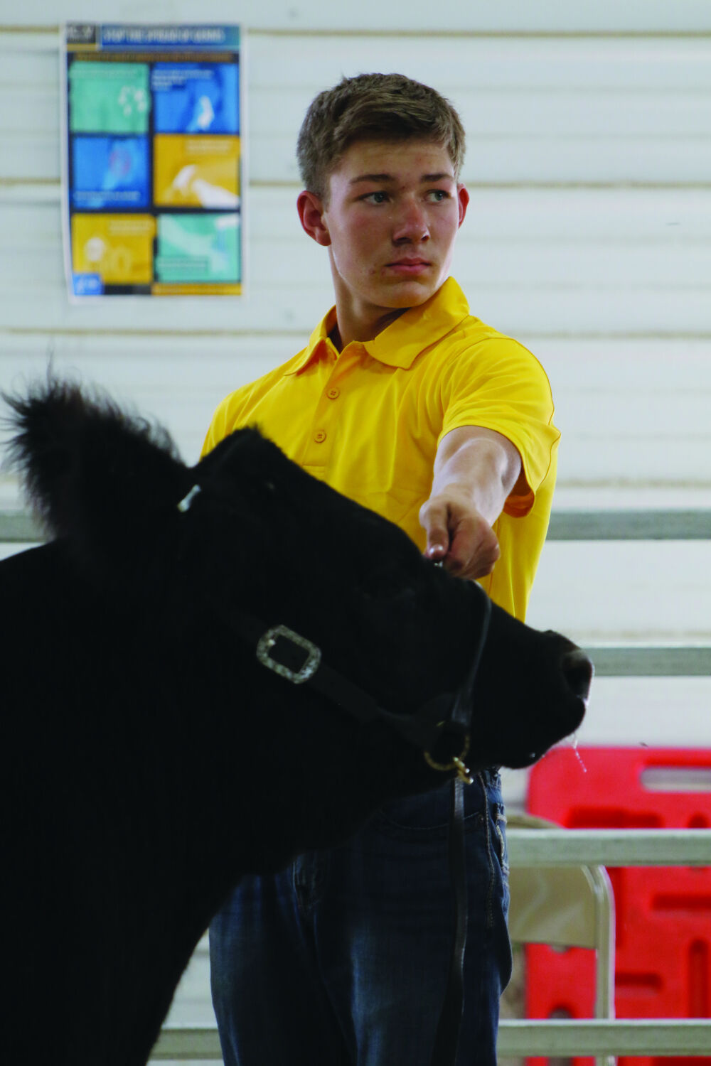 Allen brothers take home large animal round robin titles