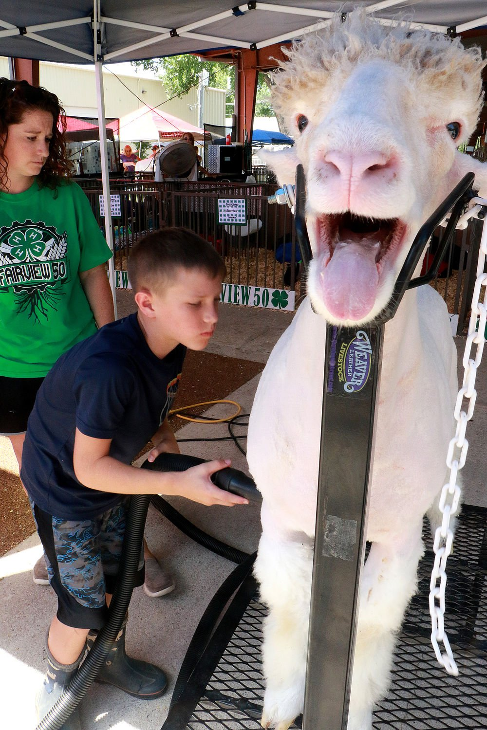 Schmers prepare for sheep showmanship