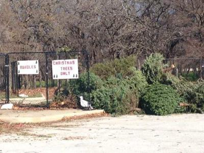 Christmas tree recycle in Lewisville