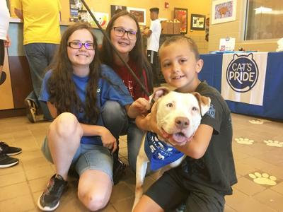 5-year strategic plan for Mesquite Animal Services