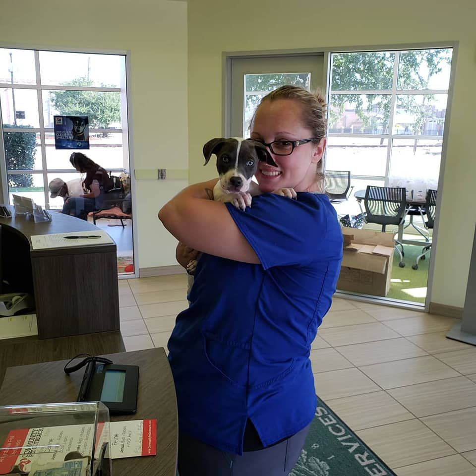 Coppell adopts 21 animals during Clear the Shelters