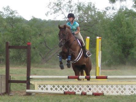 Polos for Pony Club Members