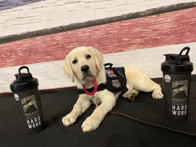 Patriot PAWS Service Dogs received $14,000 From Ascent Protein