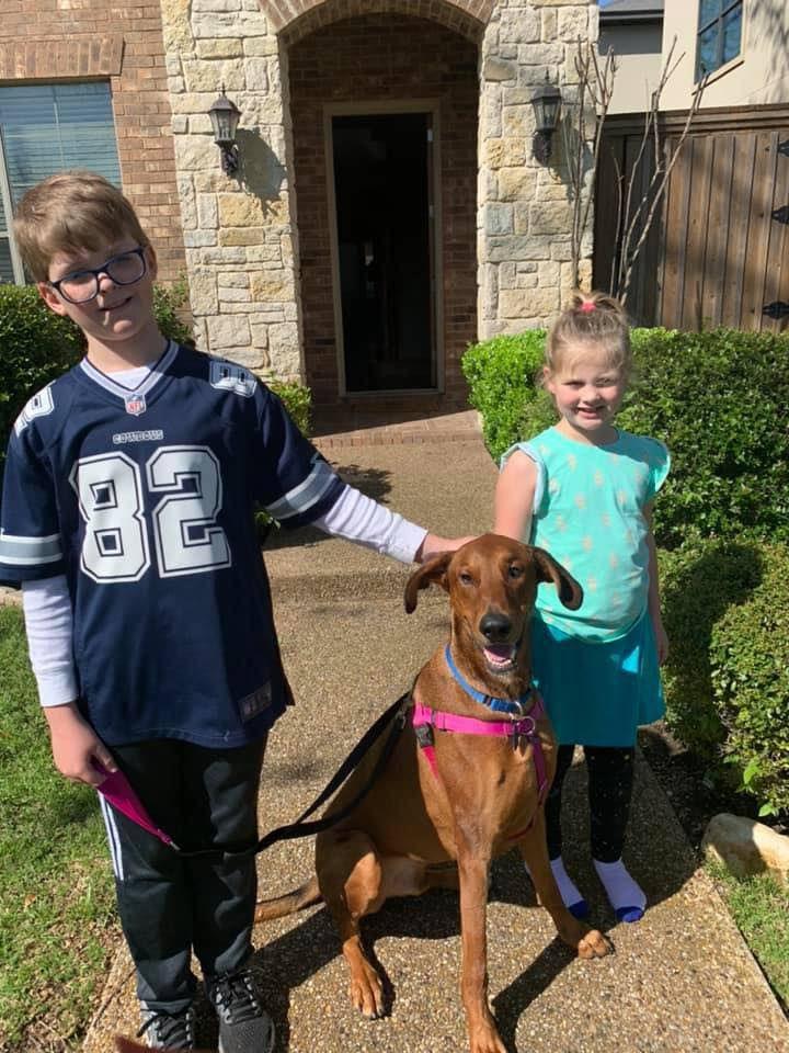 SPCA McKinney halts adoptions