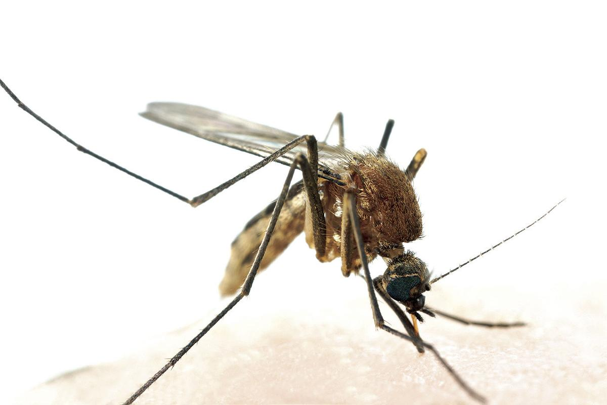 denton county to spray for mosquitoes near little elm frisco