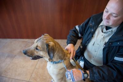 Flower Mound animal services encourages pet registration
