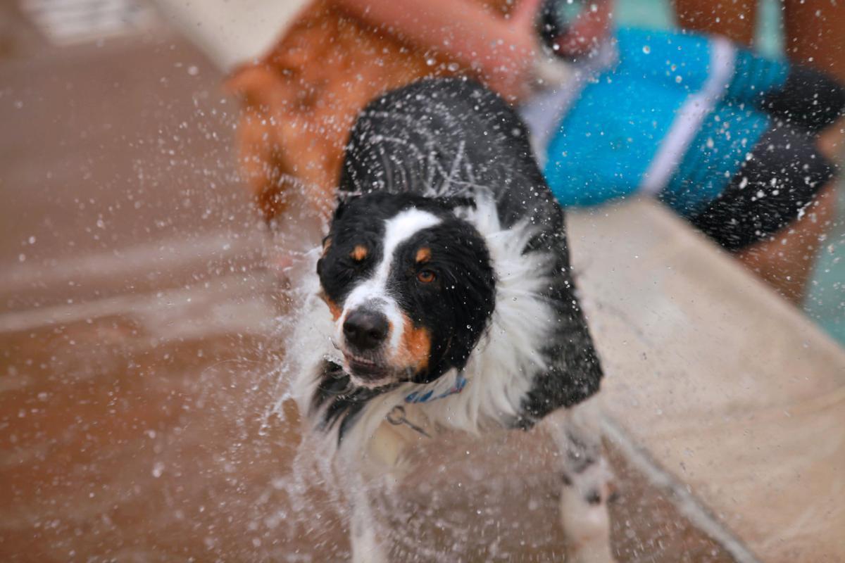 Vanston pool prepares for doggie splash day mesquite - Vanston swimming pool mesquite tx ...