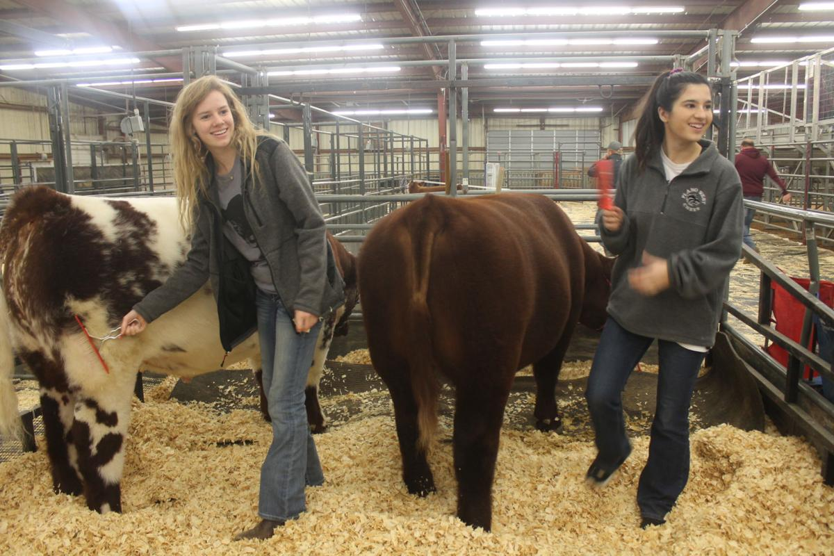 Learning to live: Collin County Junior Livestock Show carries on the tradition