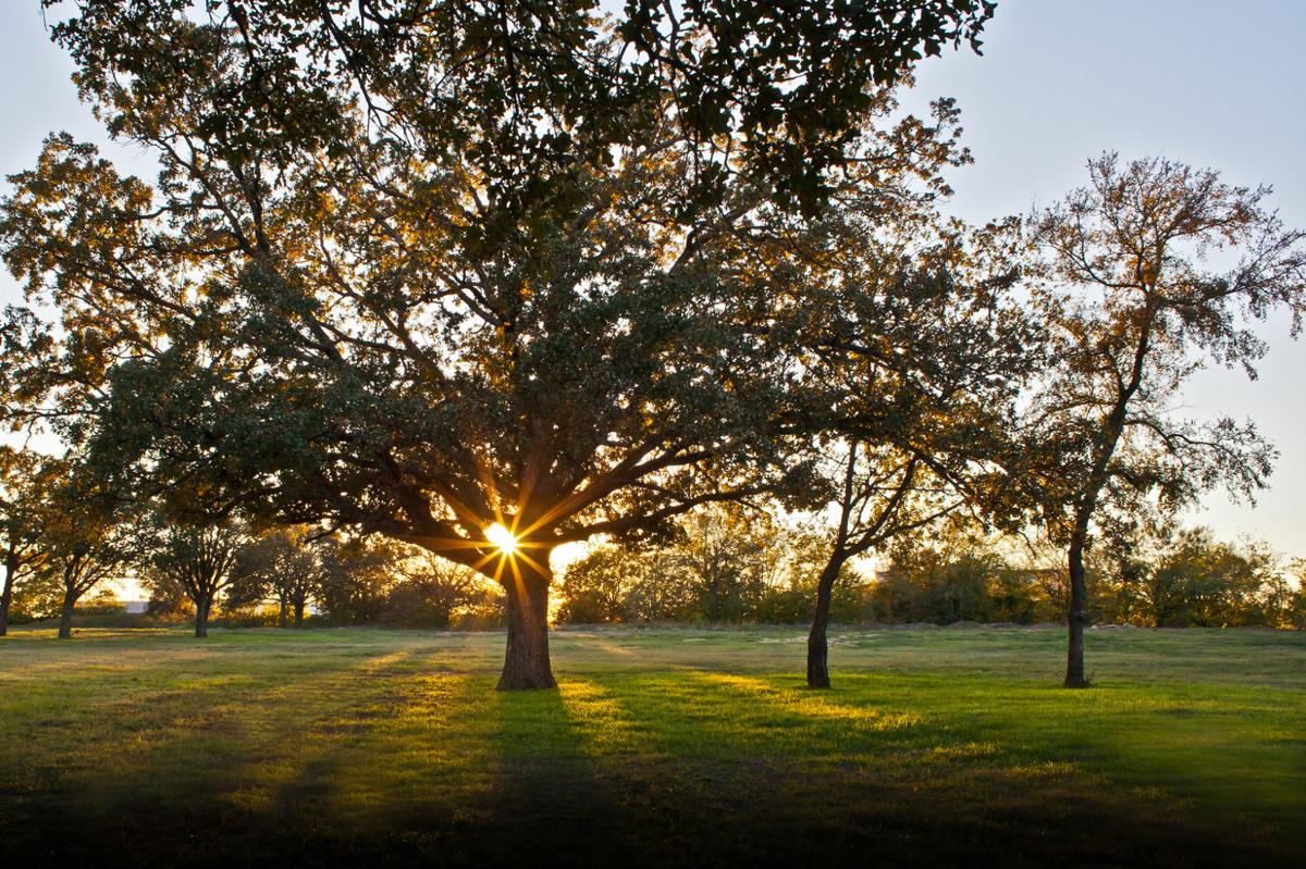 Flower Mound officials fear tree ordinance could be at risk News