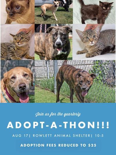 Rowlett adopt-a-thon