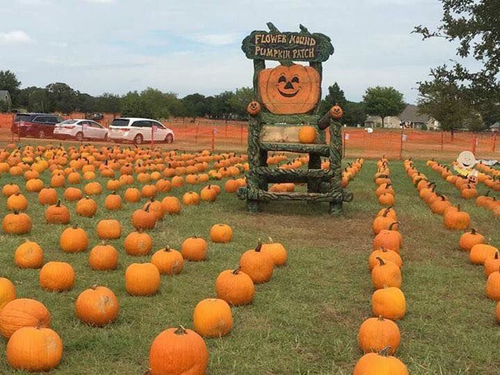 flower mound p z recommends denial of cvs at the pumpkin patch