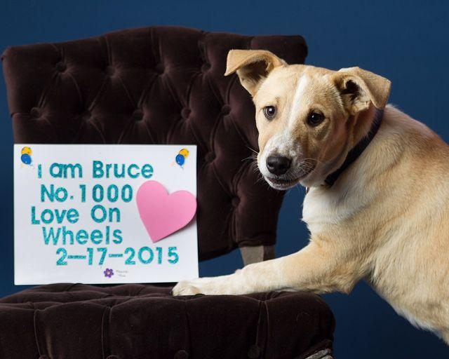 Humane Society Of Flower Mound Sends 1 000th Dog To New York The Leader Starlocalmedia Com