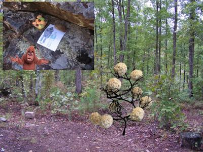 COLUMN: In the Shadows : The Popcorn Ball Tree