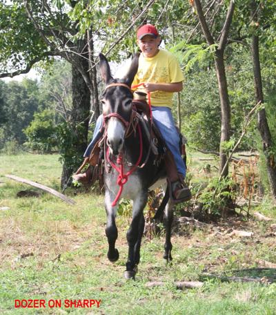 Former local donkey to be on stamp