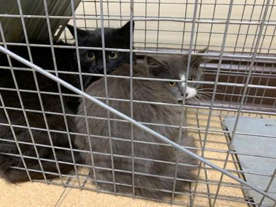 Stone County SPCA receives grant