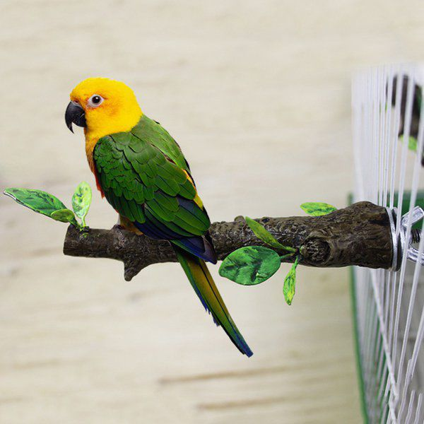 VETERINARY VIEWPOINTS: Pet birds: What you need to know | Lifestyles ...