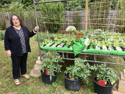 Jewel Sample raised garden