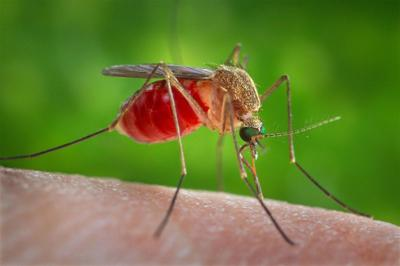Which mosquitoes should we be concerned with?