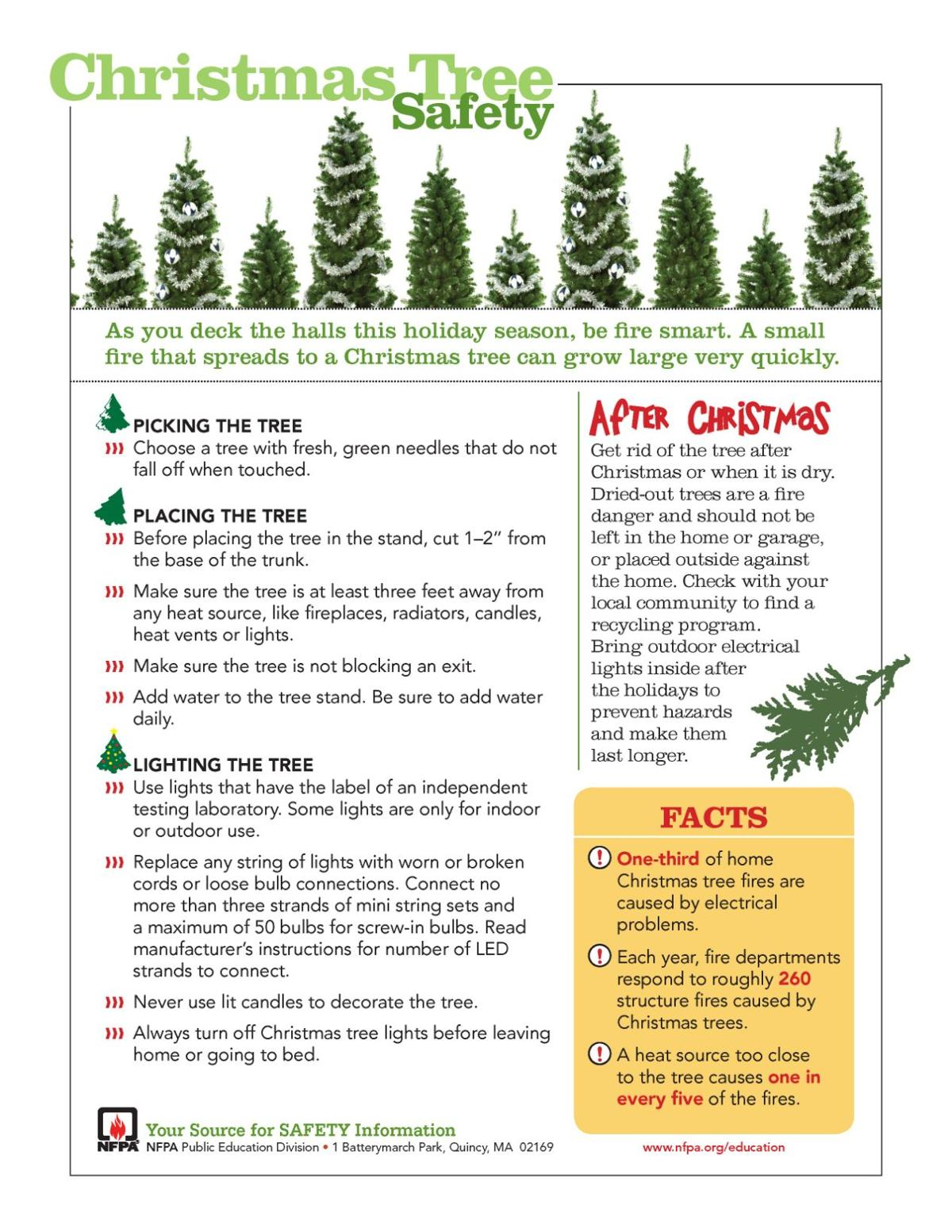 How Often To Water Christmas Tree.For A Safe Christmas Follow These Live Tree Tips Local