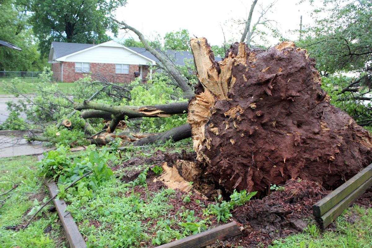 Tree blocking 12th Ave.