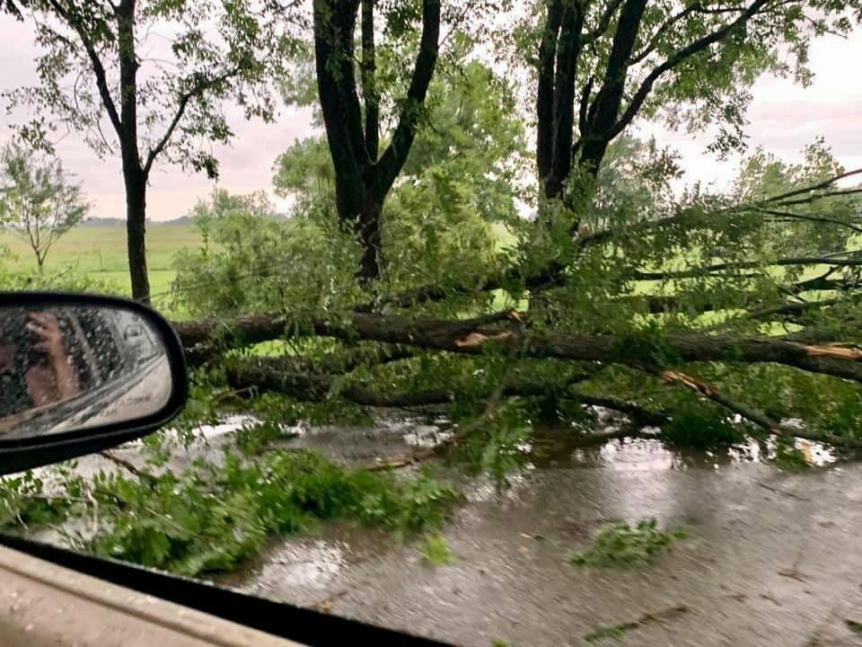 Yale tree damage