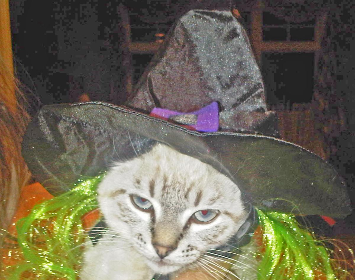 pet costumes can be scary at halloween | local news | stwnewspress