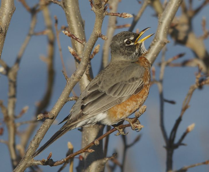 LIFE AT BOOMER: Bird numbers fluctuating