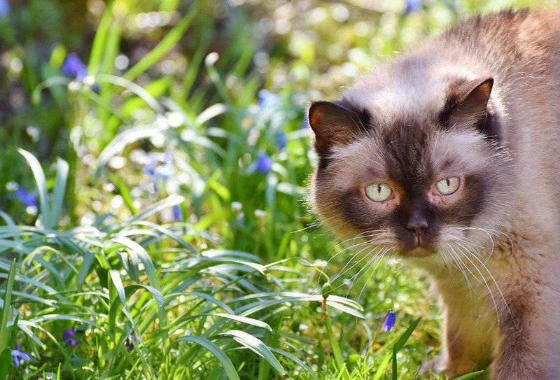 VETERINARY VIEWPOINTS: Leptospirosis in cats | Lifestyles ...