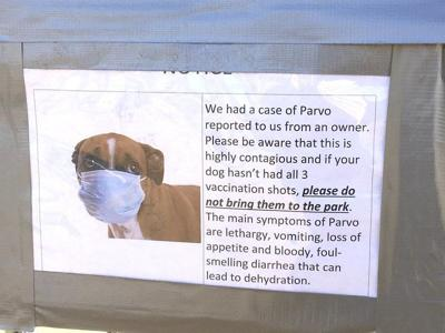 Dog Park Issues Parvovirus Warning Puppies And Unvaccinated Dogs At