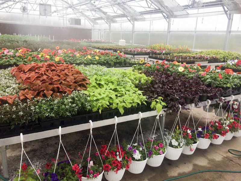 Q5: First of Stillwater FFA\'s plant sales to be held Wednesday ...