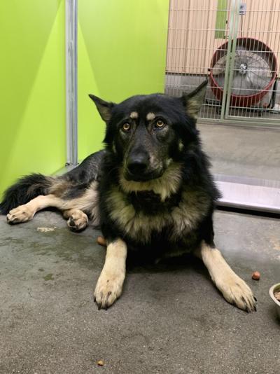 A community dog