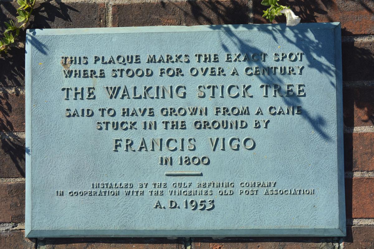 Vigo Tree