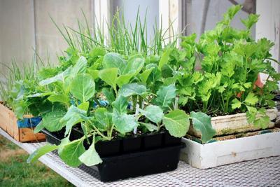 Veggie Transplants