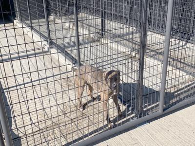 Vet Encourages Public To Talk To Supervisors On Animal Shelter