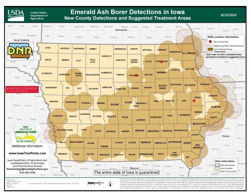 Ash Borer distribution