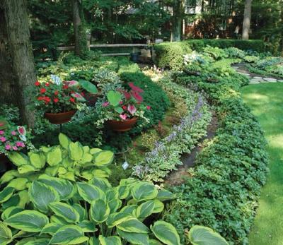 Growing Hosta in your flowerbeds