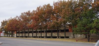 Oak trees in front of Memorial Hospital