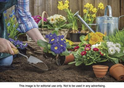 Avoid aches and pains when gardening